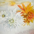 dahlias-aquarelle-Francoise-Dubourg