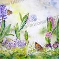 jacinthe-papillon-aquarelle-Francoise-Dubourg