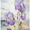 bien-avant-nous-aquarelle-Francoise-Dubourg