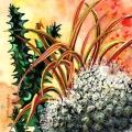 cactus-boule-Francoise Dubourg