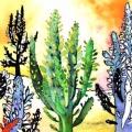 cactus-desert-Francoise Dubourg