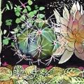 cactus-nuit-Francoise Dubourg