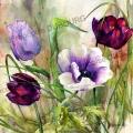 anemone-et-tulipes-aquarelle-Francoise-Dubourg