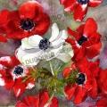 anemones-rouges-aquarelle-Francoise-Dubourg