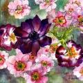 anemone-primeveres-aquarelle-Francoise-Dubourg