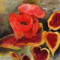 coquelicot-feuilles-flottent-aquarelle-Francoise-Dubourg