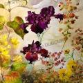 Iris-violets-euphorbe-encre-de-Chine-couleur-Francoise-Dubourg