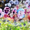pensees-pervenches-encre-de-Chine-couleur-Francoise-Dubourg