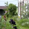 la-saison-des-iris-encre-de-Chine-couleur-Francoise-Dubourg