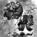 anemones-genet-Françoise-Dubourg-Encre de Chine